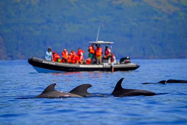 Dolphin-watching on a riding holiday on Faial