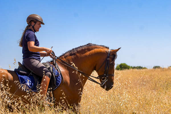 Dressage rider riding her horse in a field