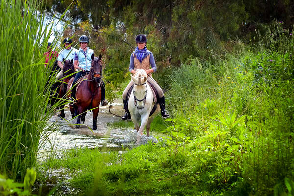 Dressage riders enjoying a peaceful trail ride