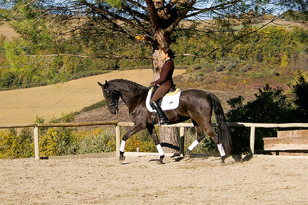 Dressage training in Italy