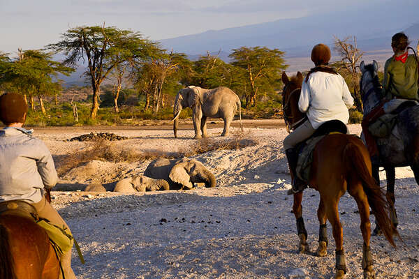 Elephant and horses in Tanznaia
