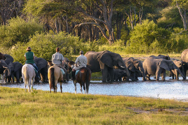 Elephants and horseback riders in Hwange, Zimbabwe