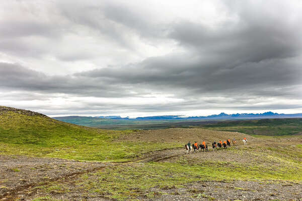Equestrian trail ride in Iceland