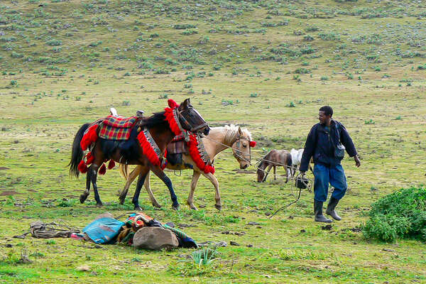 Ethiopian guide leading two Oromo horses on a trail ride