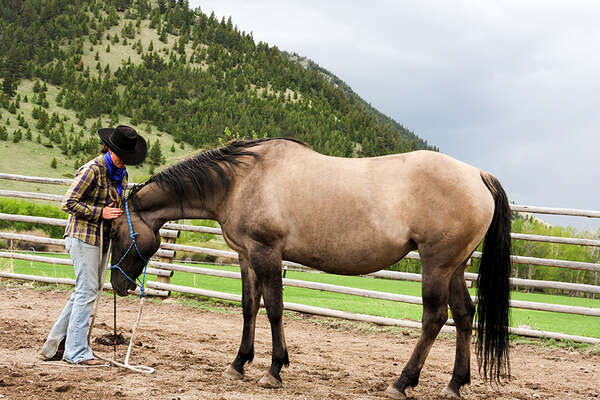 Experiencing the natural horsemanship