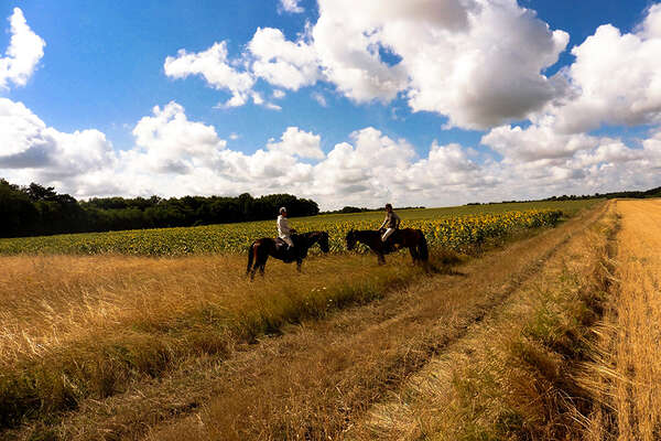 France on horseback, in Pays de la Loire