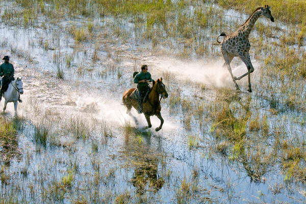 Galloping with a giraffe in the Okavango Delta