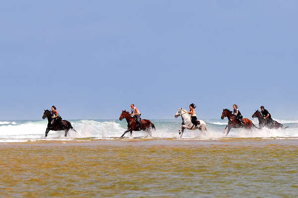 Galop in the french beach