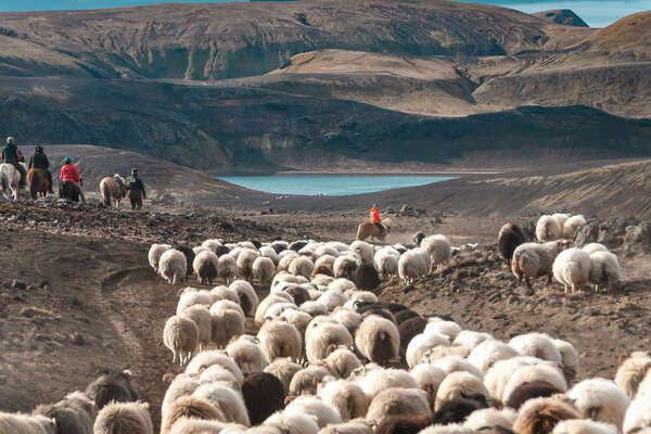 Gathering cattle by  a beautiful lake on horseback in Iceland