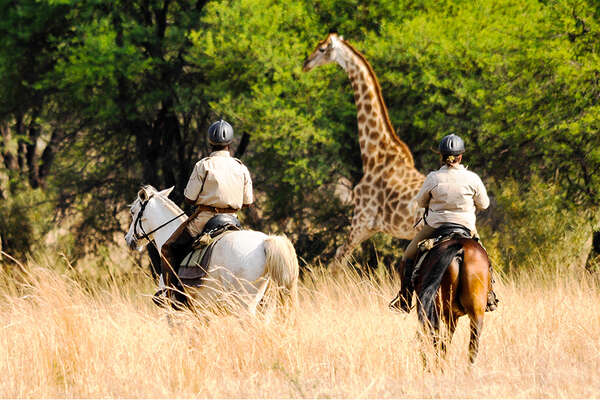Giraffe and Horses in Botswana