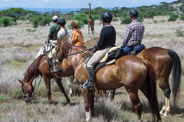 Giraffe watching a group of riders in Taniza, Amboseli