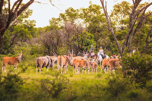 Group of riders watching elands at Ant's Lodges on a horse safari