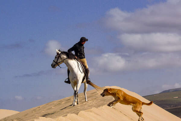 Horse and rider on a sand dune, Morocco