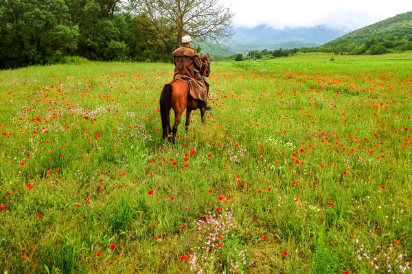 Horse and rider standing in a field of wild flowers