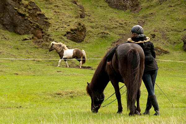 Horse and trail in Iceland
