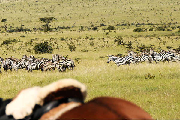 Horse and Zebras in kenya