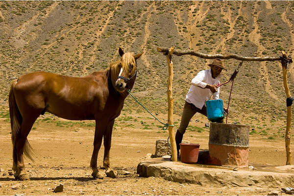 Horse in High Atlas Moutains in Morocco