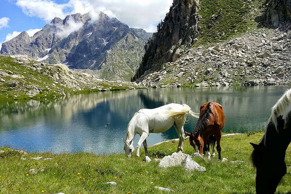 Horse riding trail in the Alps in France