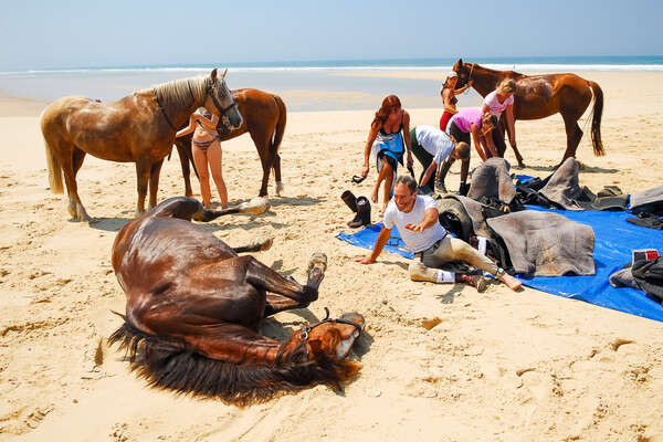 Horse rolling on the beach