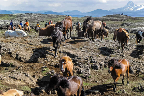 Horse round up in northern Iceland