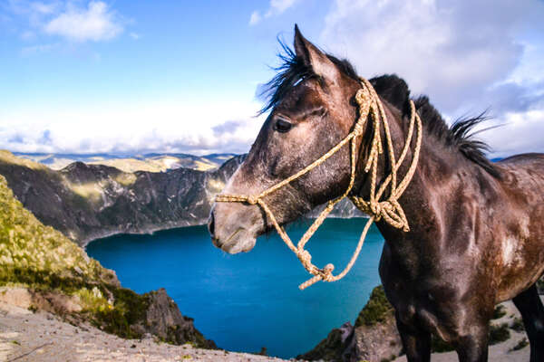 Horse standing in front of the Quilotoa crater lake in Ecuador