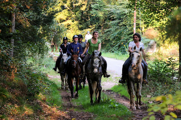 Horseback in Alsace forest