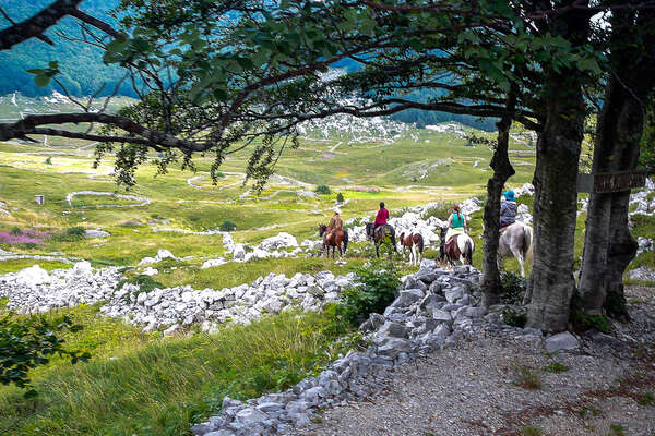 Horseback riders enjoying a trail ride in Croatia