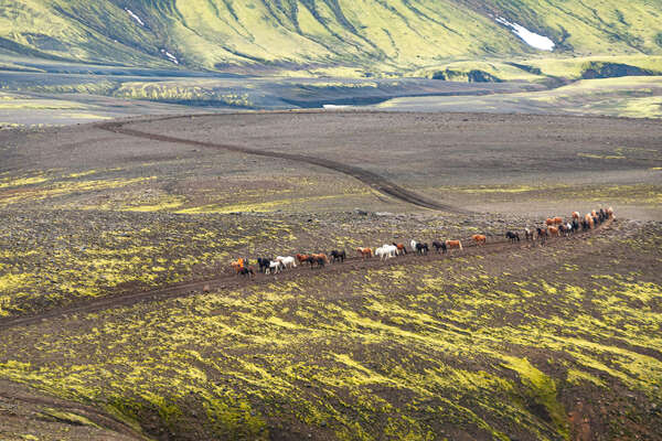 Horseback riders riding in Iceland