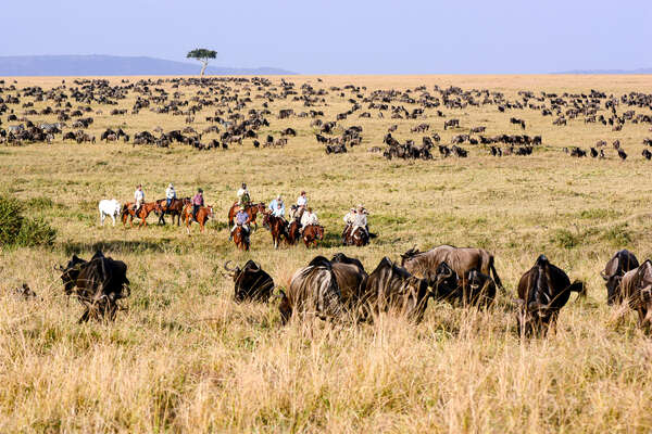 Horseback riders watching a group of wildebeest on a riding safari