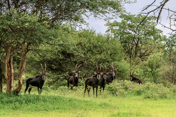 Horseback safari in Zimbabwe with Ride Zimbabwe