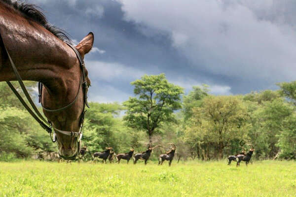 Horseback safari with Ride Zimbabwe