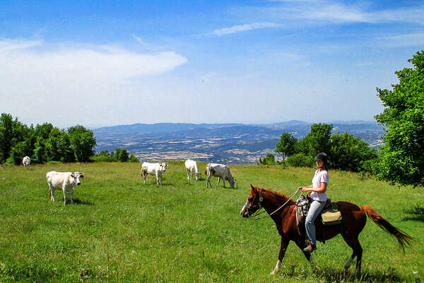 Horseback trail ride in Tuscany Italy