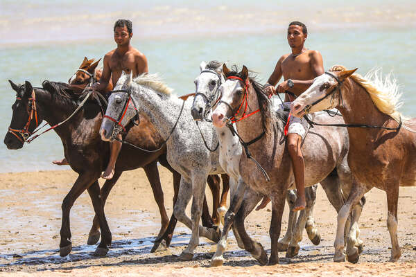 Horses along the beach in Egypt
