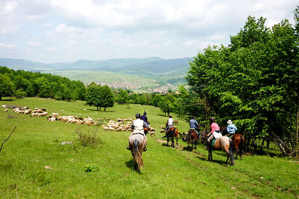 Horses and cattle in Romania, Transylvania