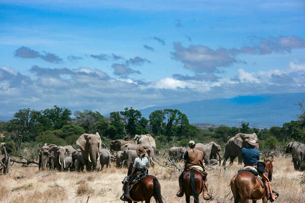 Horses and elephants on safari in Africa