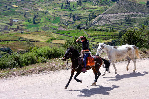 Horses and rider on trail ride in Peru