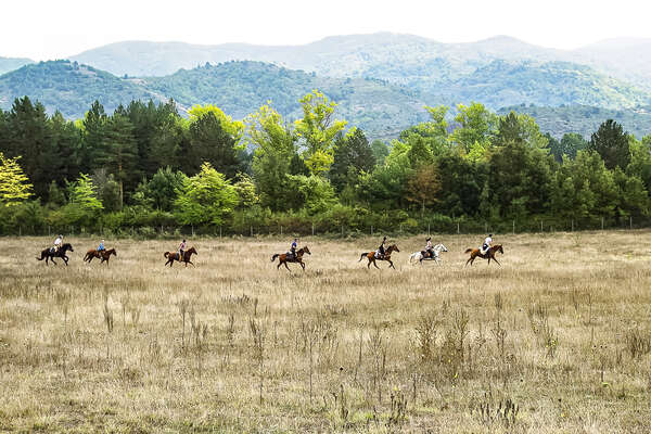 Horses and riders galloping in a field in Bulgaria