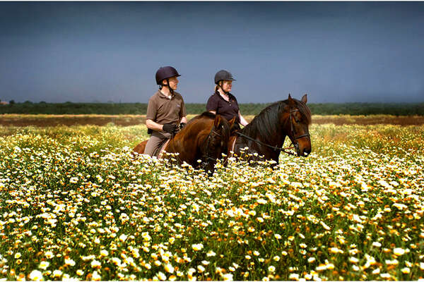 Horses and riders in fields in blossom