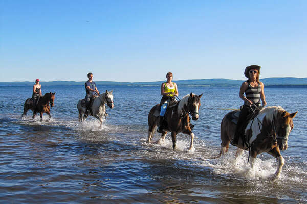 Horses and riders in the ocean in Gaspe, Canada
