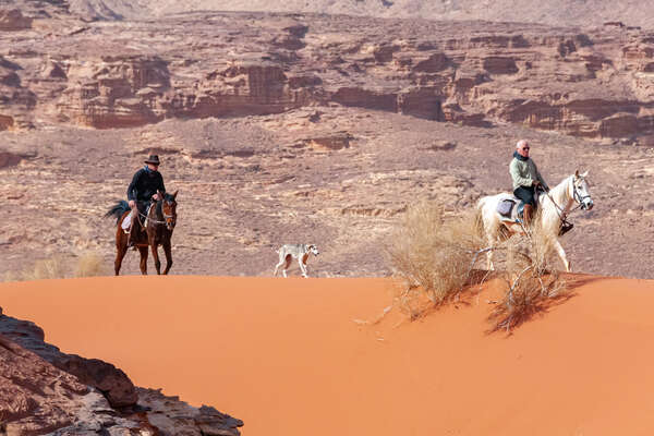Horses and riders on trail in the Wadi Rum desert