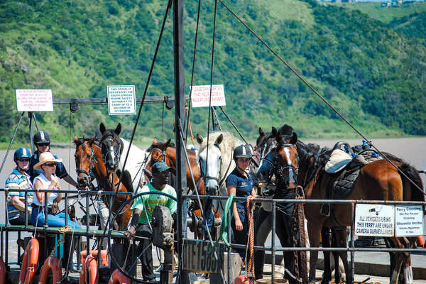 Horses and riding crossing the estuary on a ferry on the Kei River beach trail