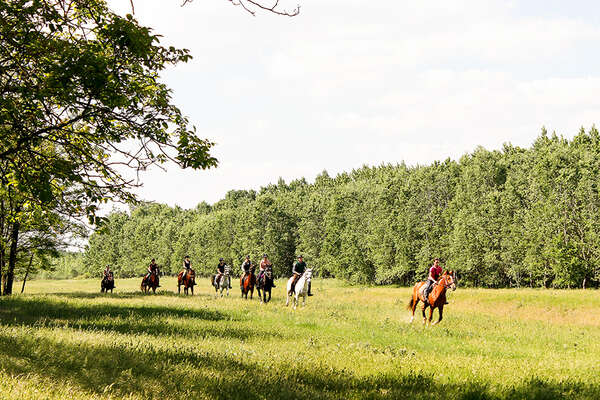 Horses cantering in Hungary