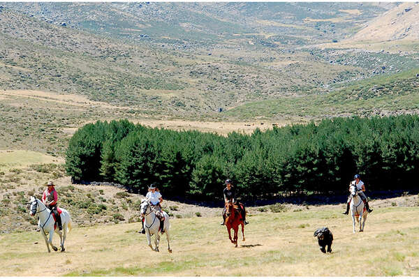 Horses cantering in the Gredos Mountains