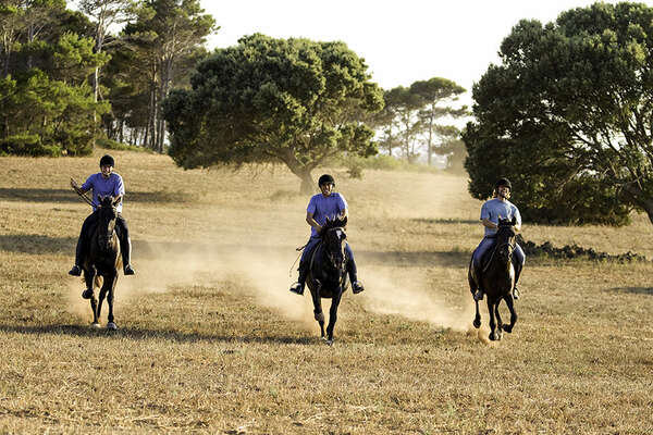 Horses cantering in the menorcan landscapes