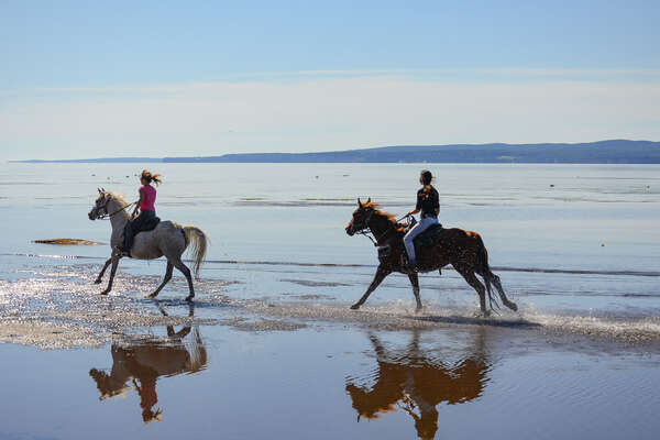 Horses cantering in the water in Canada