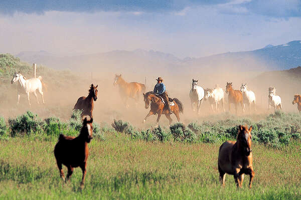 Horses cantering in Wyoming