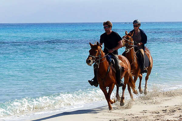Horses cantering on the french atlantic coast