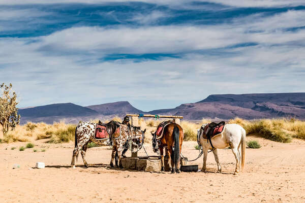Horses drinking at awell in the sahara