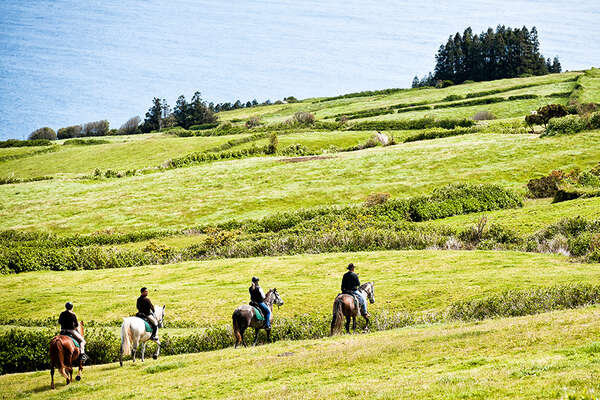 Horses in Azores meadows