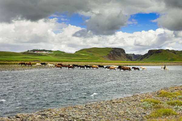 Horses in Iceland, northern Europe